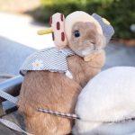 ウサギの中でも人気の種類、ネザーランドドワーフについて