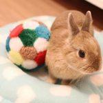 子ウサギの体重を増やすには?増え方はどれくらい?