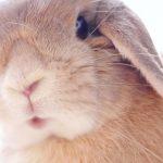 垂れ耳で可愛いロップイヤー色も種類もたくさんいるのです