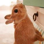 うさぎの耳の役割、前足が短いのはなぜ?