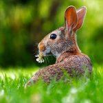 野生のうさぎ、寿命や食べ物から生態を知ろう