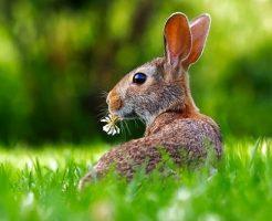 うさぎ野生 寿命 生態 食べ物