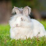 アンゴラウサギの種類別の値段や特徴とは!?